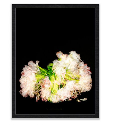 Pink Tulips shot over 14 days framed in black frame