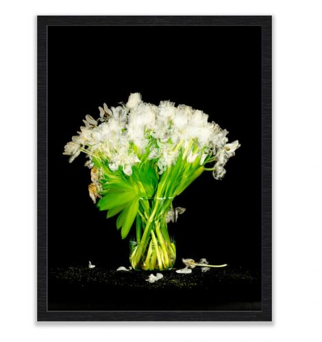 White Tulips shot over 14 days framed in black frame