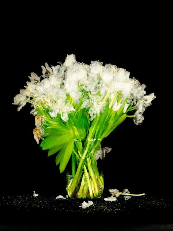 White Tulips shot over 14 days digital version 06