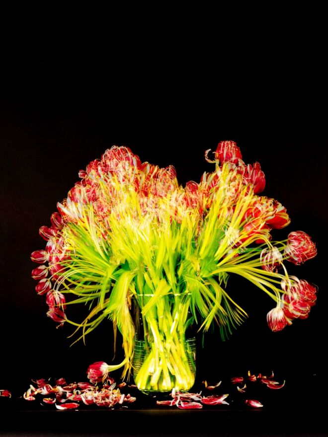Red Tulips shot over 14 days digital version 12