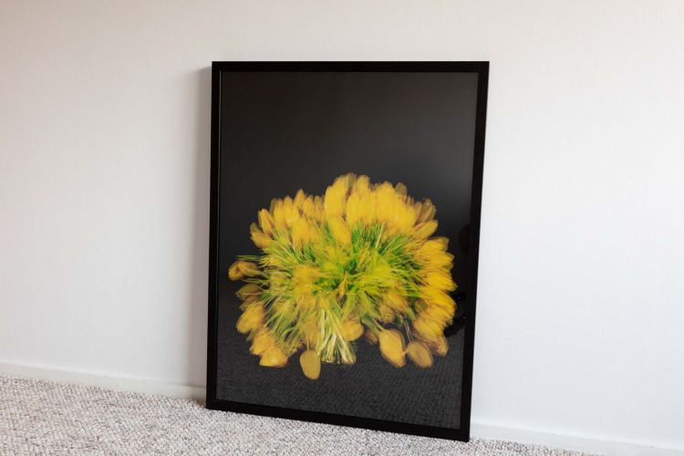 Yellow Tulips shot over 14 days framed in black frame