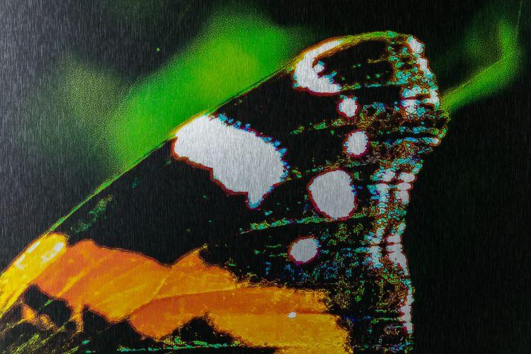Wilgenstruweel of BrabantWonen close up end result butterfly