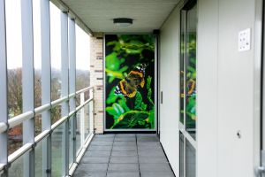 Wilgenstruweel of BrabantWonen end result overview hallway