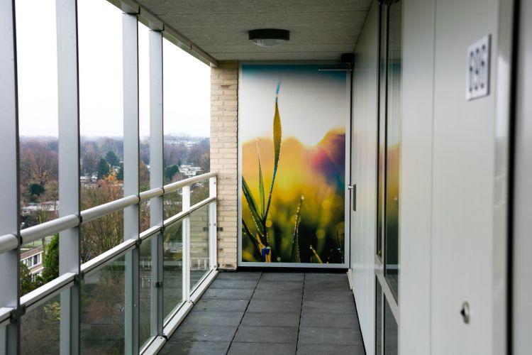 Wilgenstruweel of Brabantwonen end result overview in hallway 5731