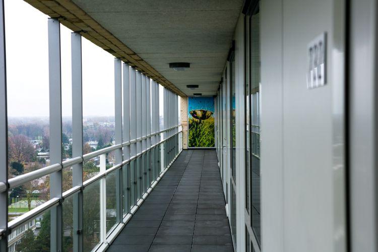 Wilgenstruweel of Brabantwonen end result long shot overview in hallway