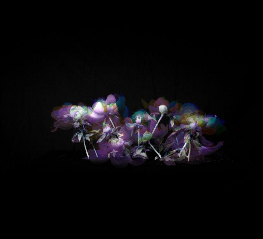 Artseries: Allisone & Oneisall Flower